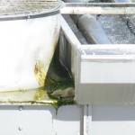 Alghe nelle torri evaporative