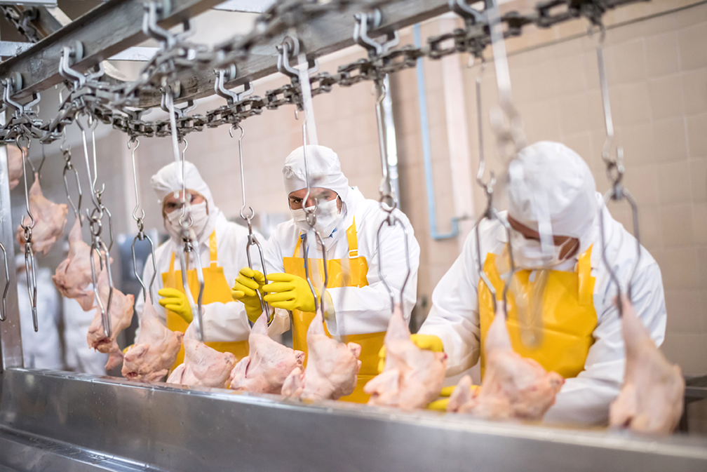 dimple jacket poultry industry