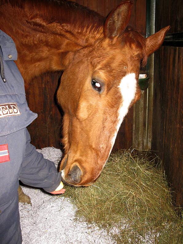 Fattoria Besana cavalli